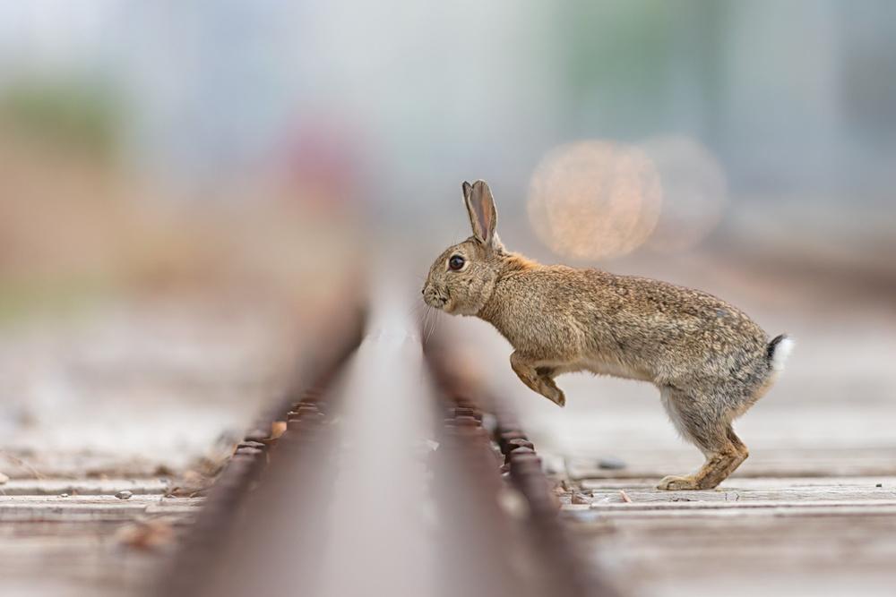 A piece of fine art art photography titled City Hurdling by Henrik Spranz