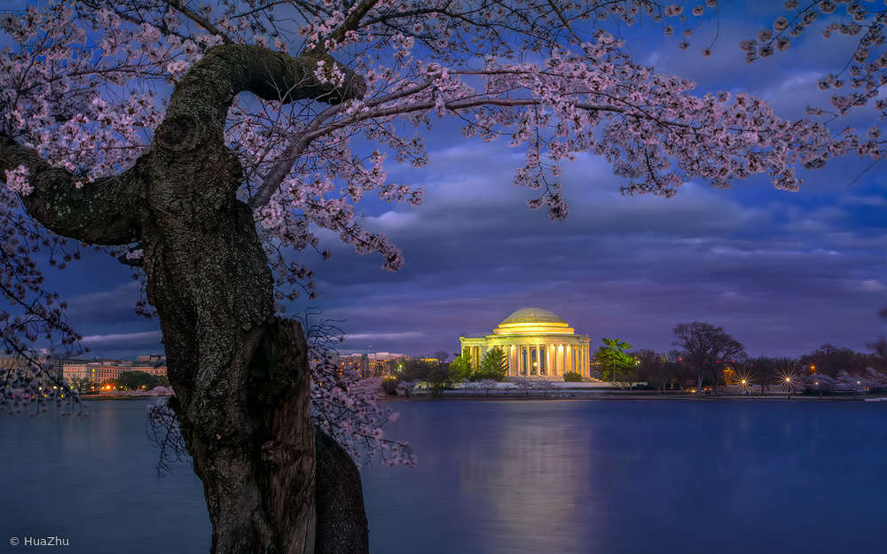 Cherry blossoms around the Jefferson Memorial