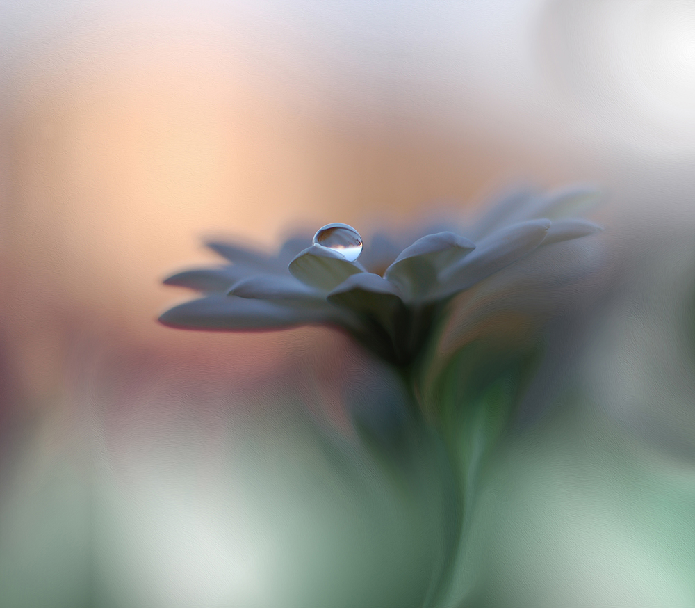 A piece of fine art art photography titled Eyes of the Light by Juliana Nan