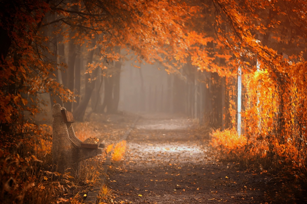 A piece of fine art art photography titled Waiting to Fall by Ildiko Neer