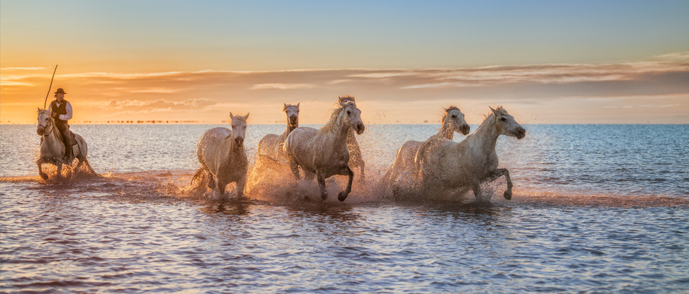 A piece of fine art art photography titled Camargue Horses II by Antoni Figueras