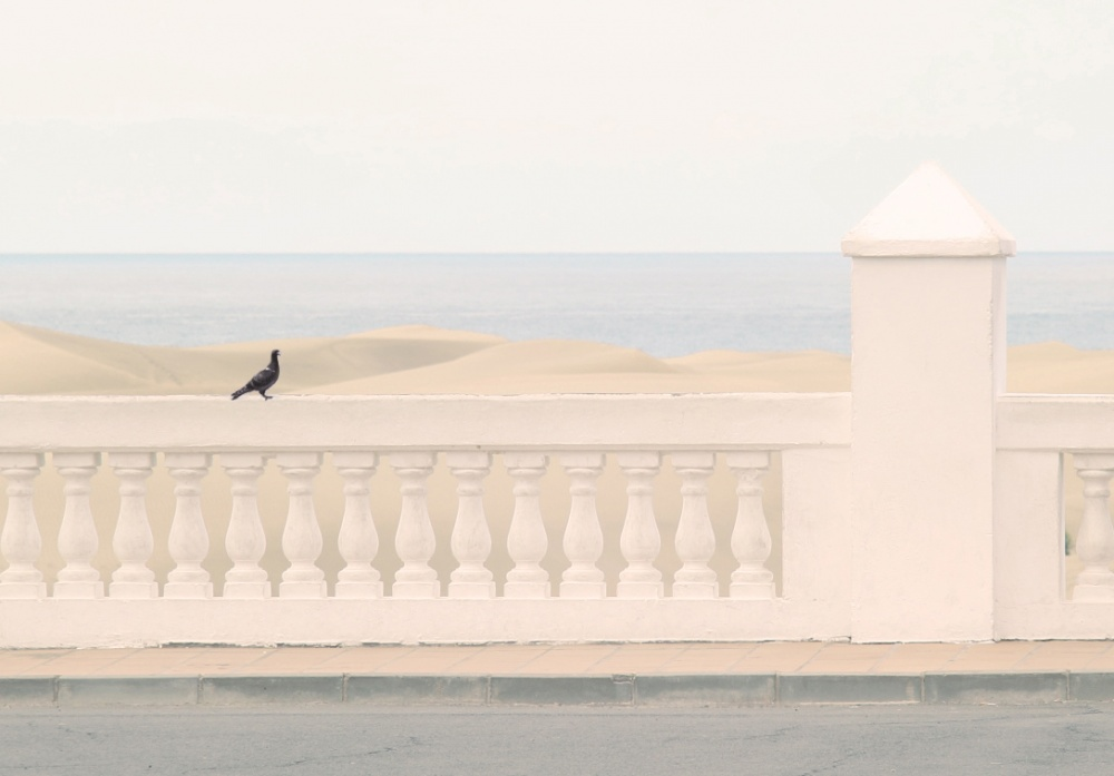 A piece of fine art art photography titled Sunny Photo With a Bird by Svetlana Shelestina