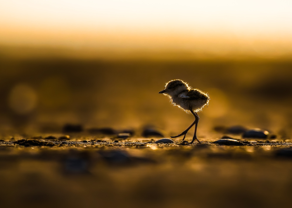 A piece of fine art art photography titled First Day Walking by Faisal ALnomas