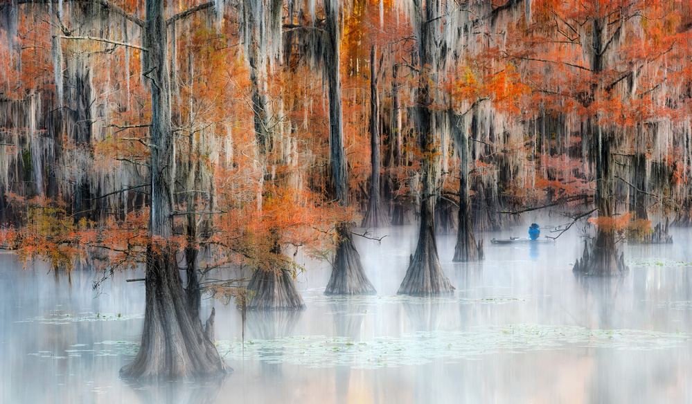 View this piece of fine art photography titled Deep in the Woods by Alex Li