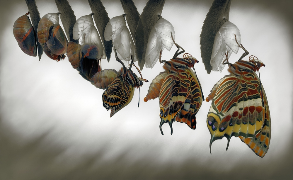 A piece of fine art art photography titled Emergence by Jimmy Hoffman