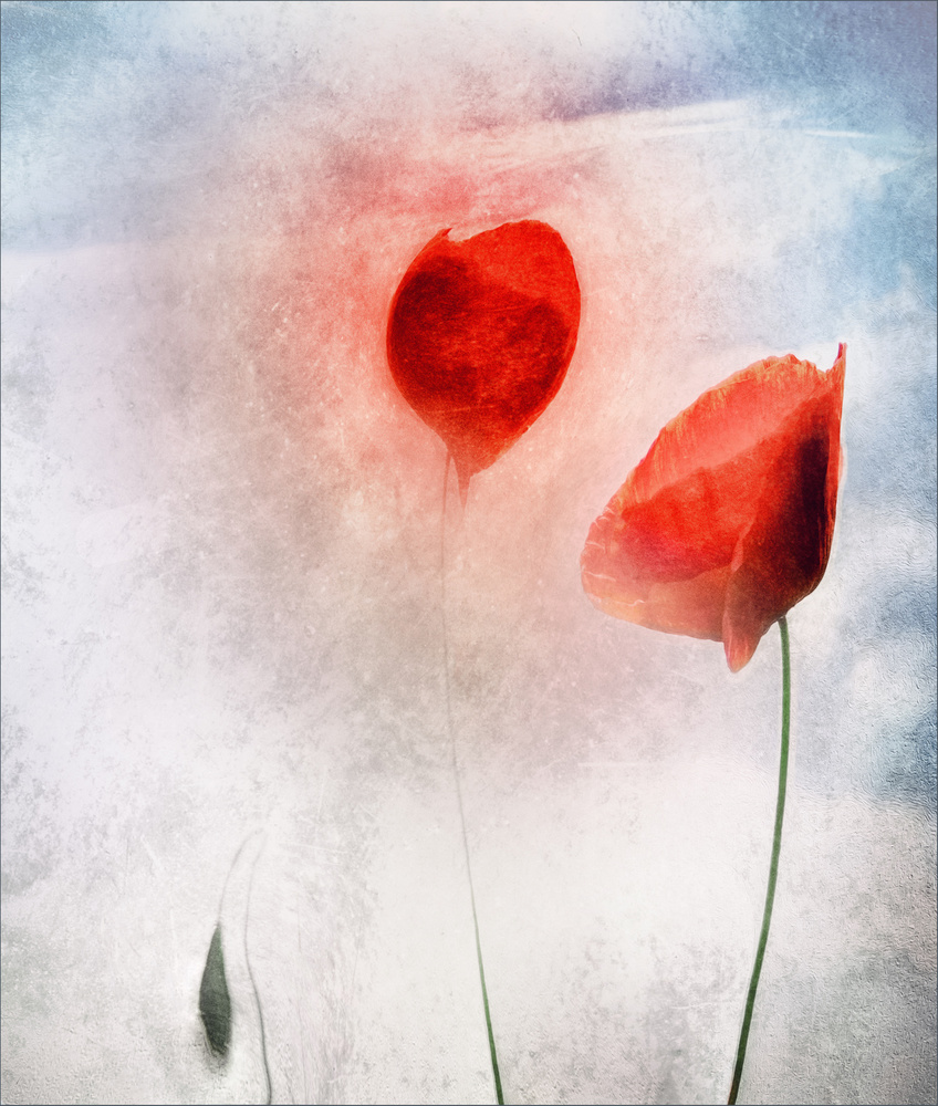 A piece of fine art art photography titled In Flanders Fields by Gilbert Claes