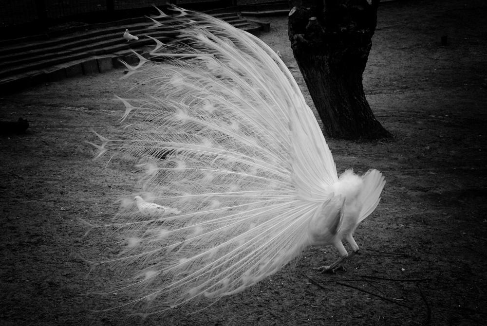 A piece of fine art art photography titled Marilyn Monroe by Jacqueline van Bijnen