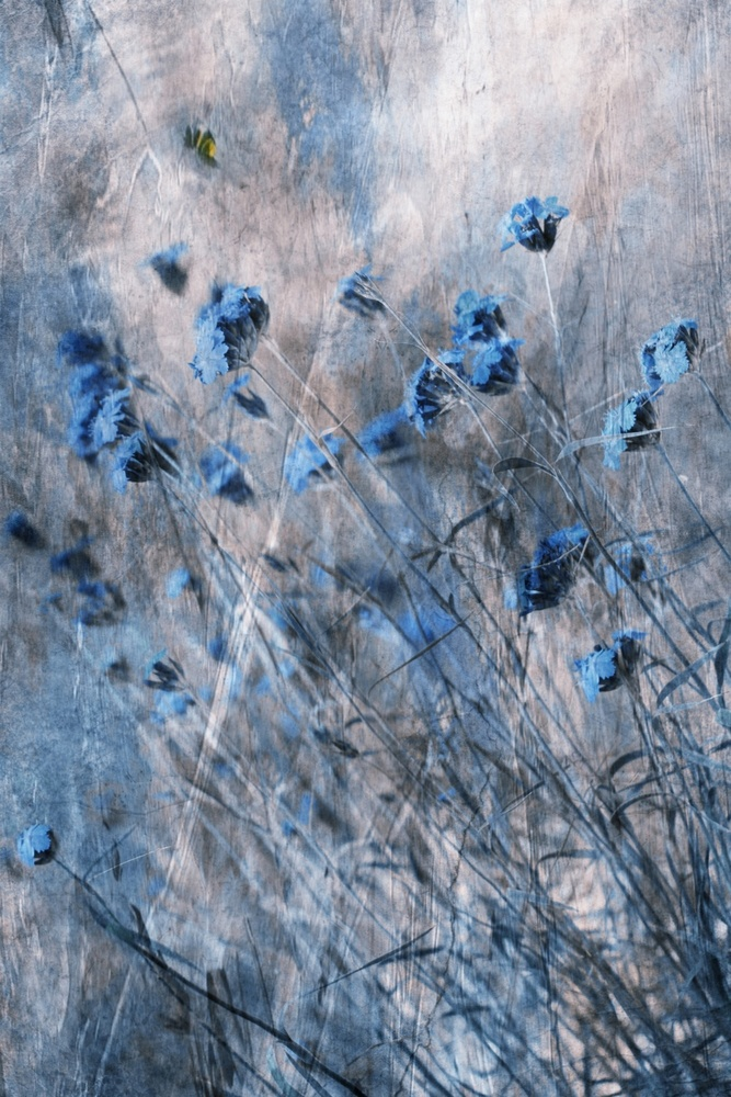 View this piece of fine art photography titled Blue Flowers by çiçek kıral