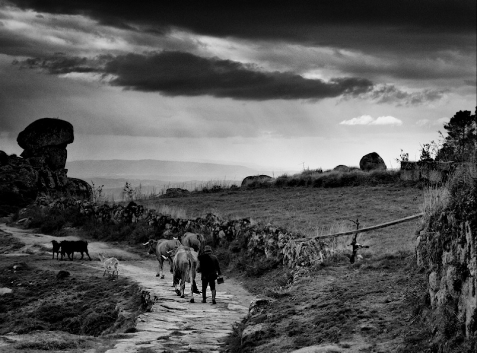 A piece of fine art art photography titled We Have Shepherds by Rui Pires