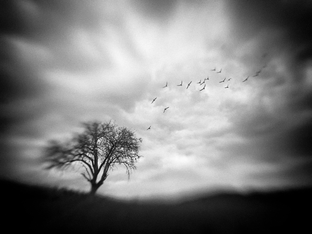 A piece of fine art art photography titled September by holger droste