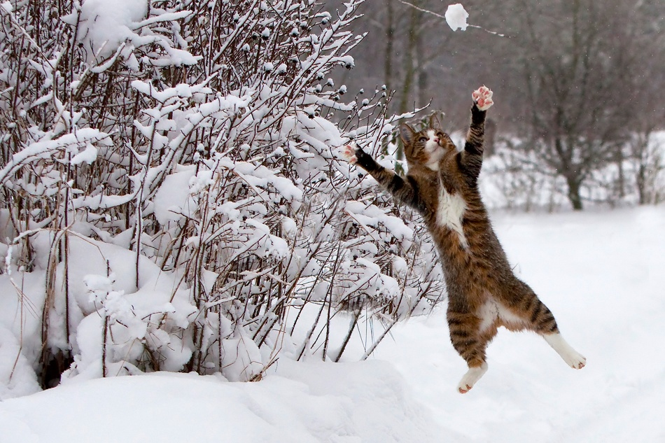 A piece of fine art art photography titled Catch the Snow by Vinni Bruhn