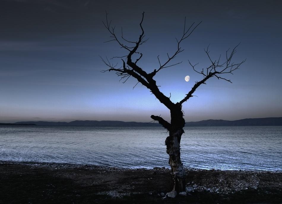 A piece of fine art art photography titled Moon Tree by Jurcic Zeljko