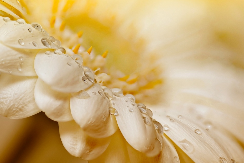 A piece of fine art art photography titled Drops by hilde van hove