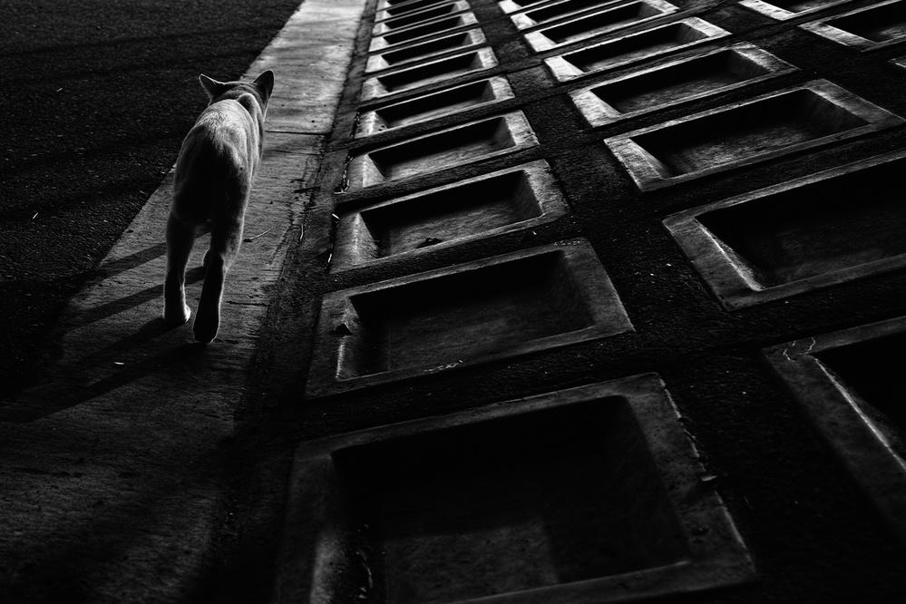 A piece of fine art art photography titled Stray Cat by Koji Sugimoto