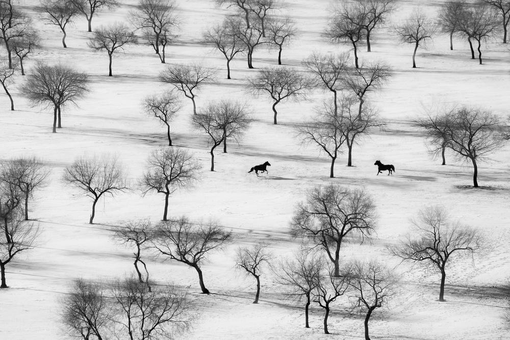 A piece of fine art art photography titled Run by Petar Sabol
