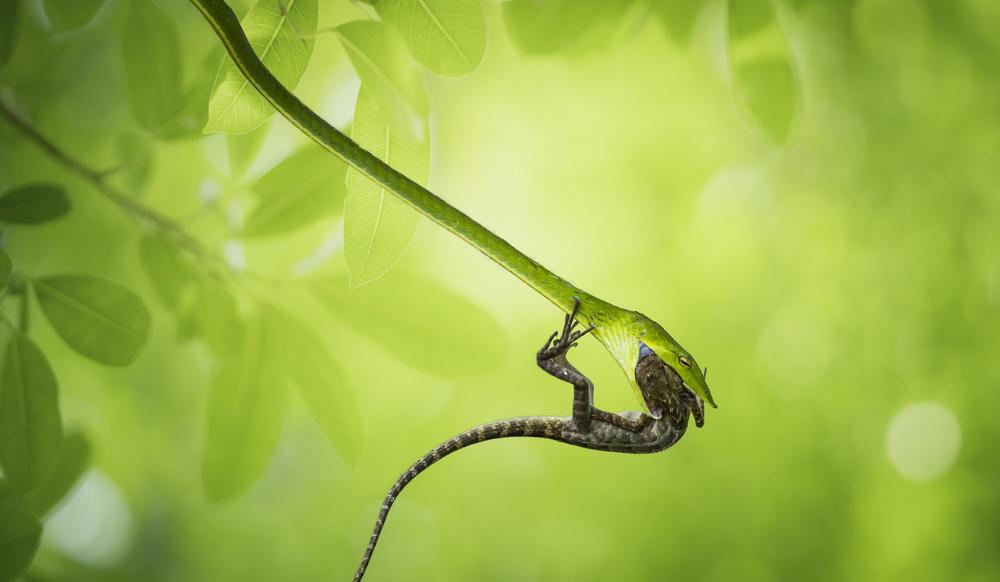 A piece of fine art art photography titled Hunter by Vu Thien Vu