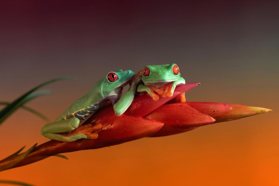 A piece of fine art art photography titled Little Secret by Wil Mijer