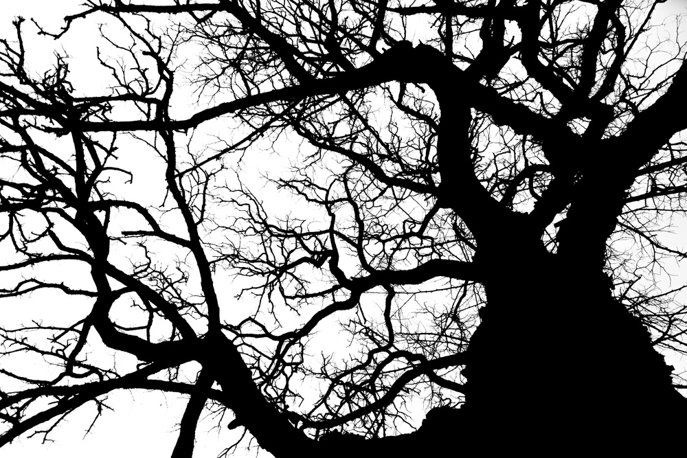 A piece of fine art art photography titled Branched by wicherbos