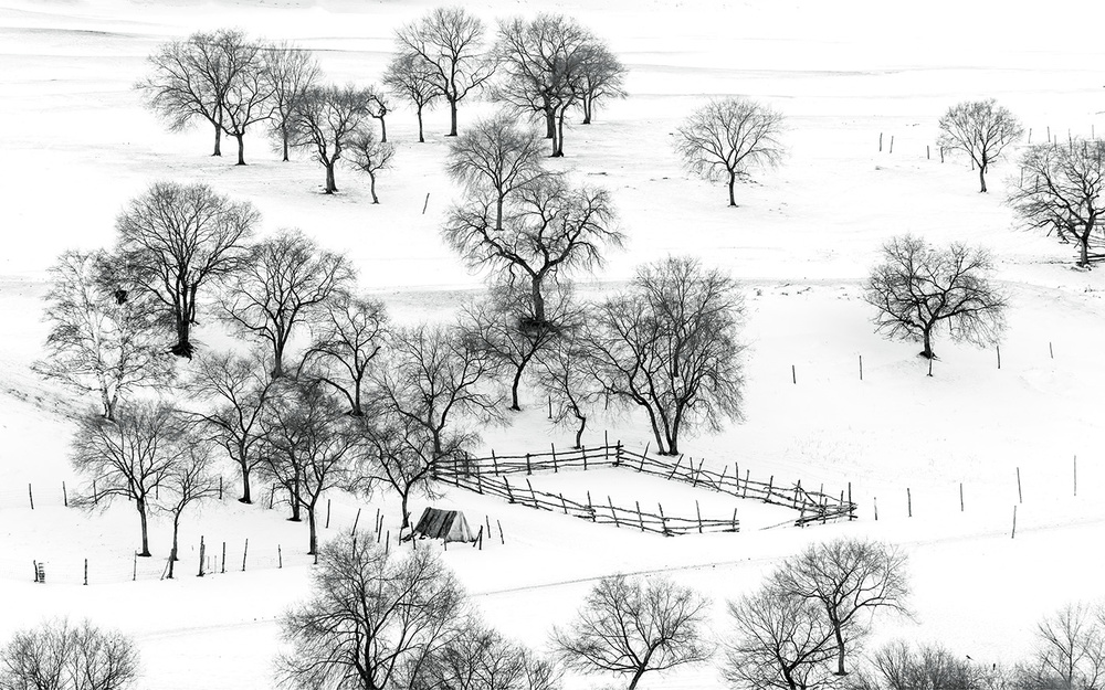 A piece of fine art art photography titled Bashang Winter by Hua Zhu