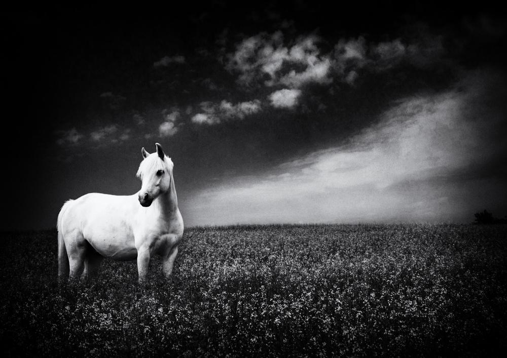 A piece of fine art art photography titled Vision by Zsóka Lorincz