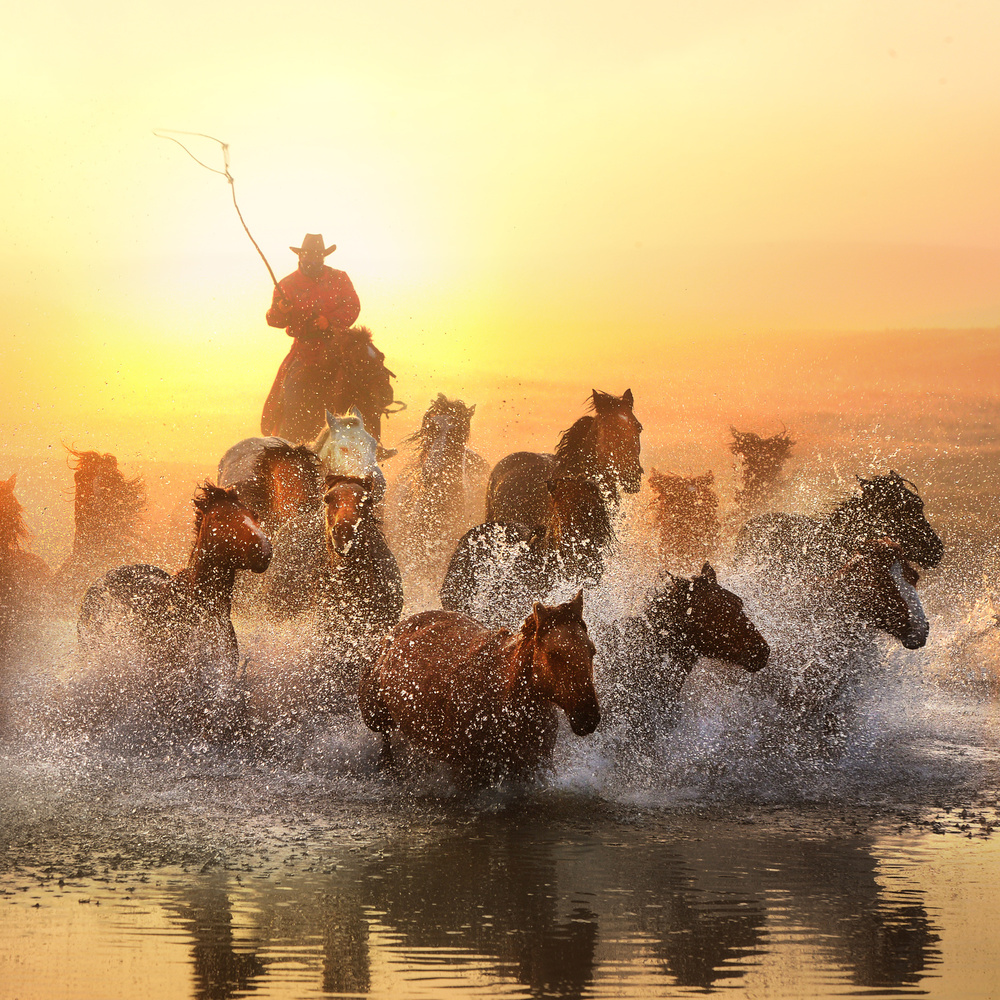 View this piece of fine art photography titled Morning exercise by Marsel van Oosten