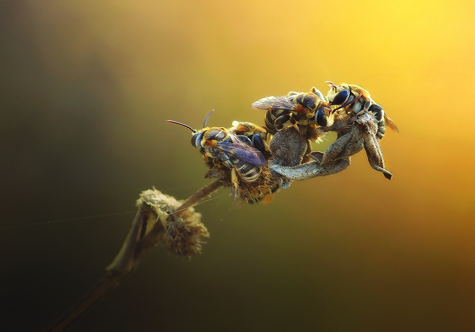 A piece of fine art art photography titled Gossip by Erwin Astro