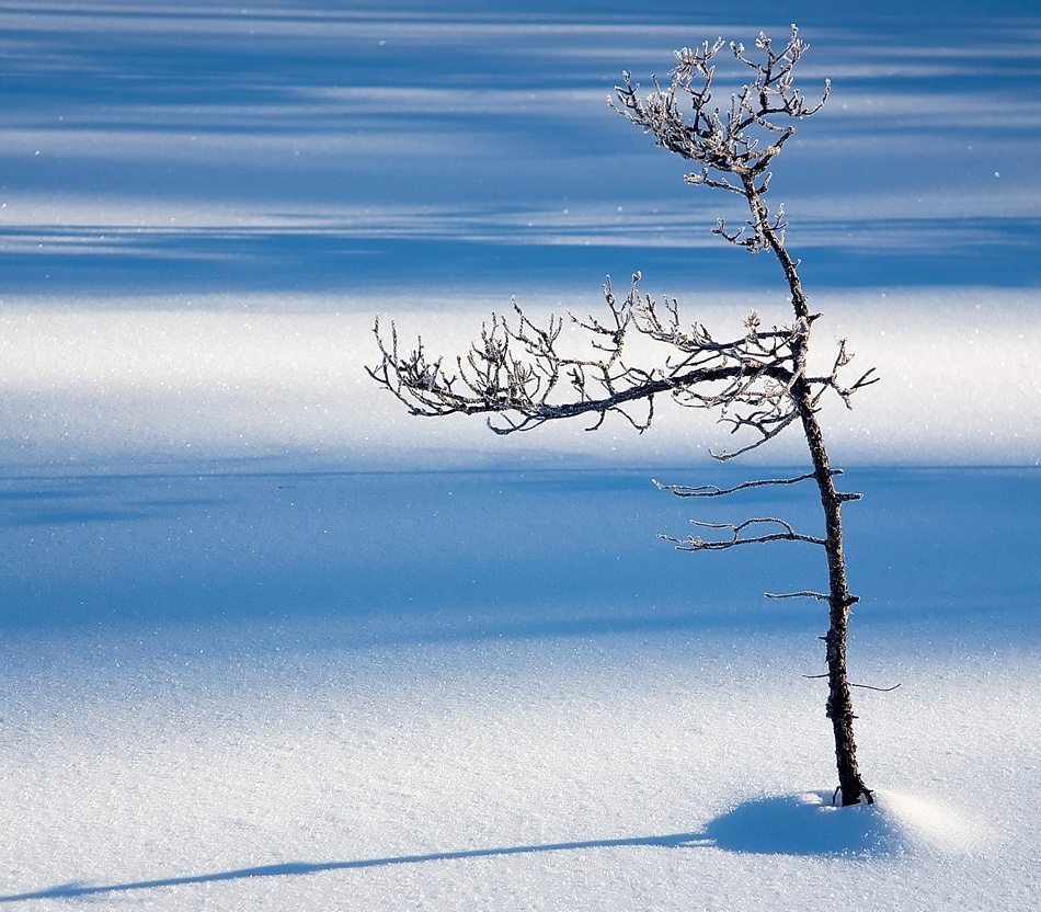 A piece of fine art art photography titled The Lonely Tree by Robert Gotthold