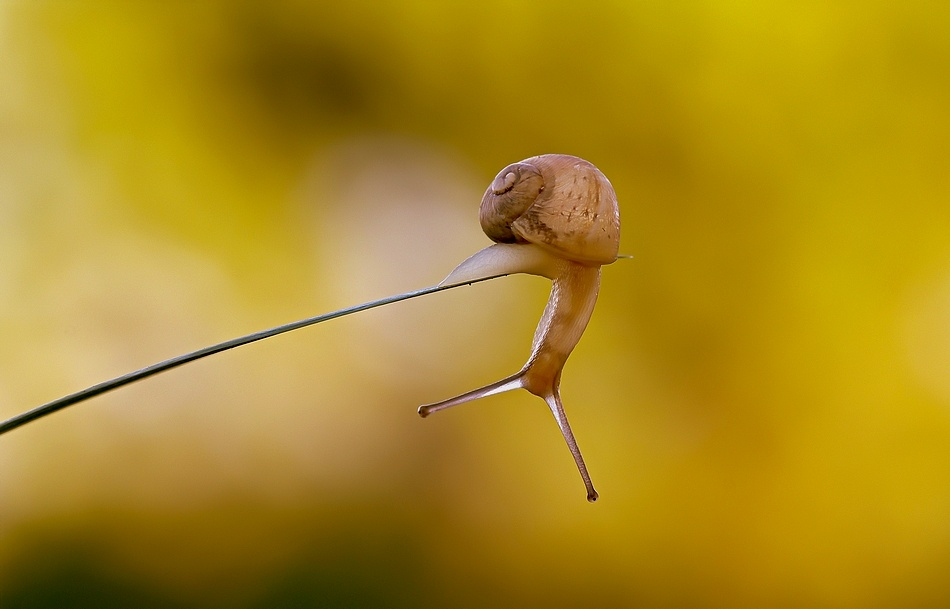 A piece of fine art art photography titled The Circus Snail by sam bastien