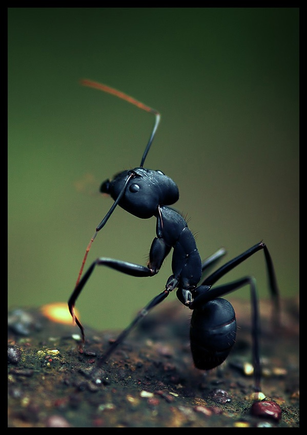 A piece of fine art art photography titled Warrior by Abhinav