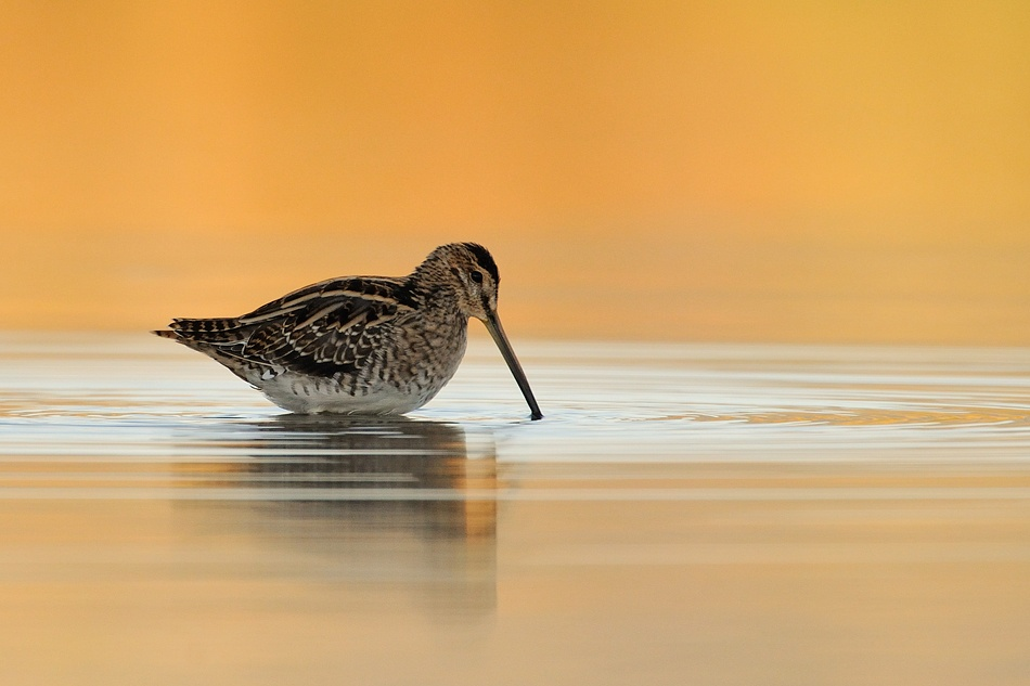 A piece of fine art art photography titled Snipe by Uri Kolker