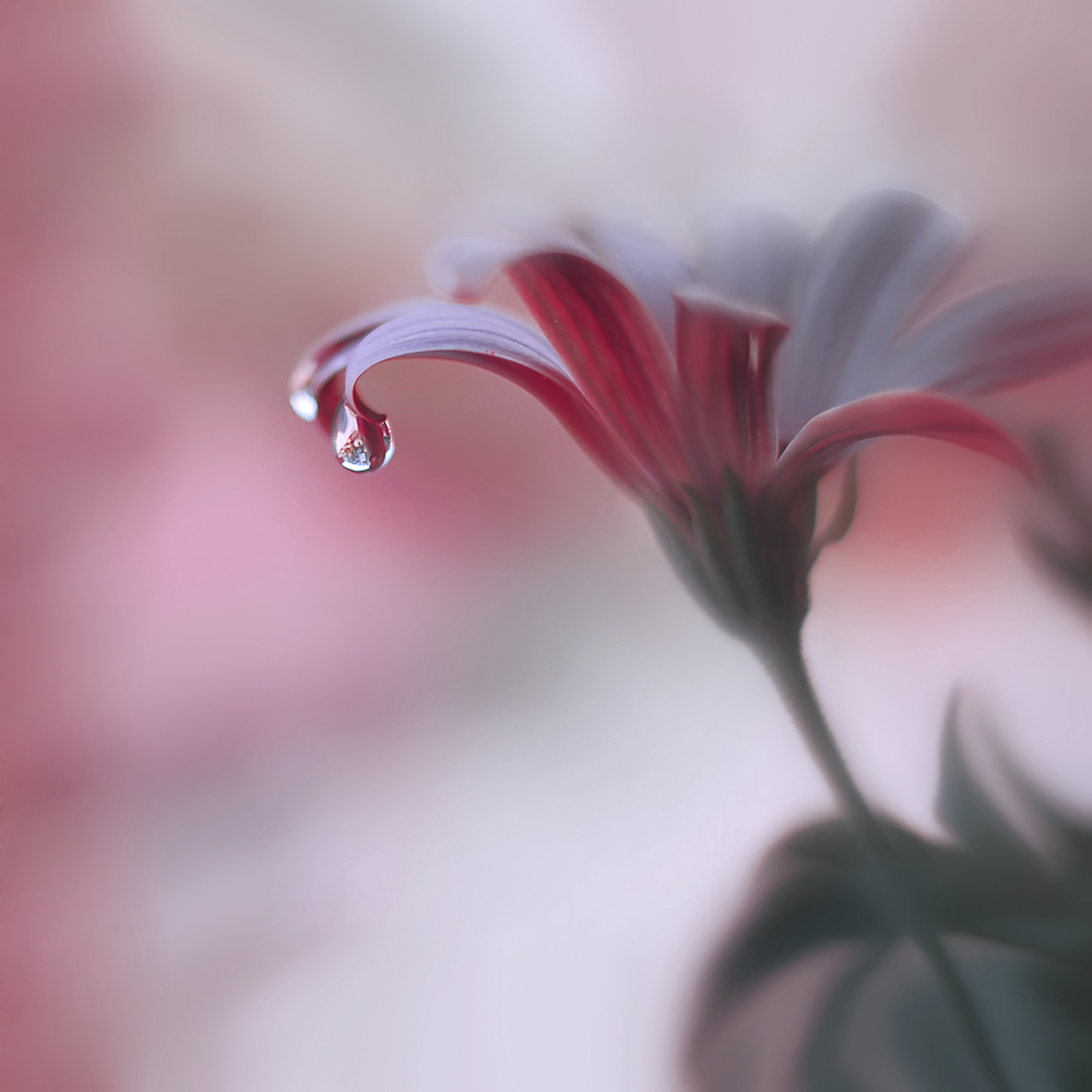 A piece of fine art art photography titled Invisible Touch by Juliana Nan