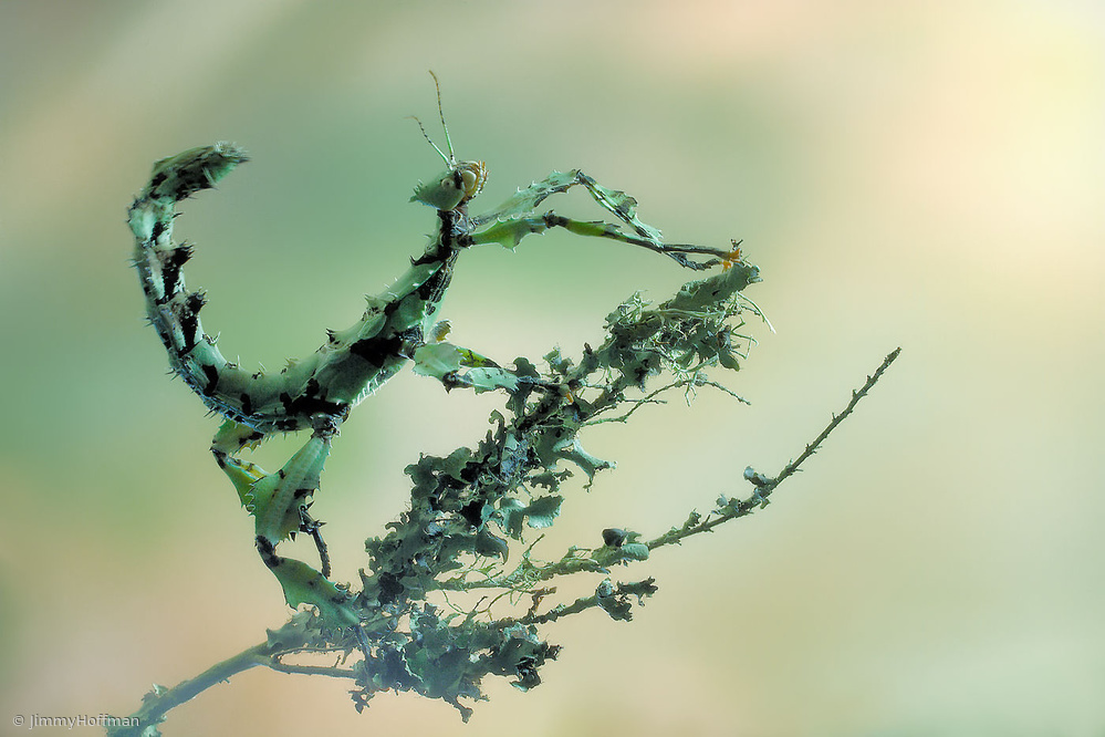 View this piece of fine art photography titled Looks like lichen by Jimmy Hoffman