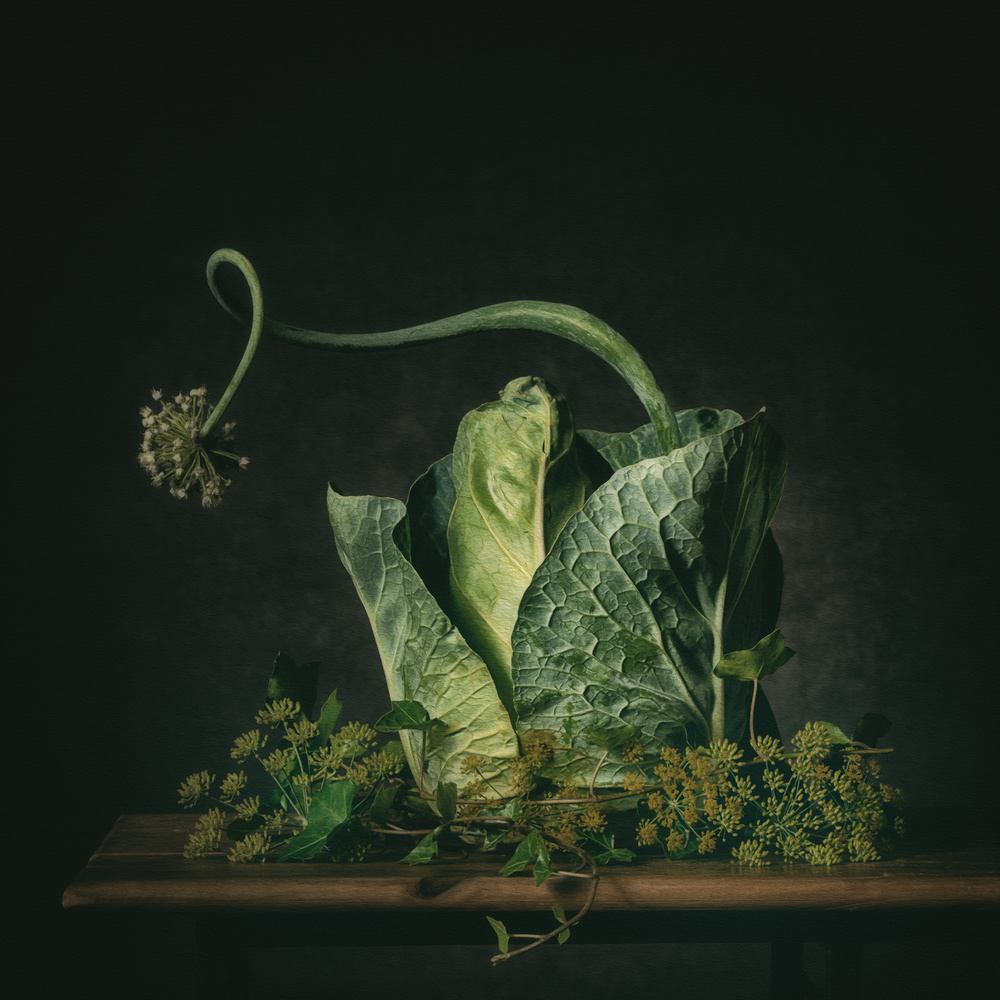 A piece of fine art art photography titled A Green Fairytale by Monique van Velzen