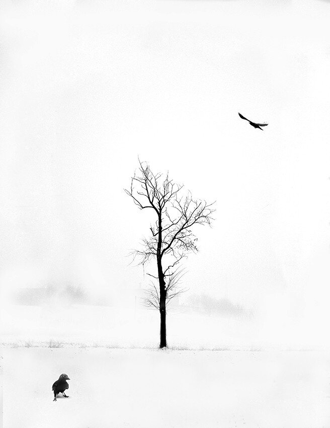 A piece of fine art art photography titled White Solitude by Andrea Auf dem Brinke