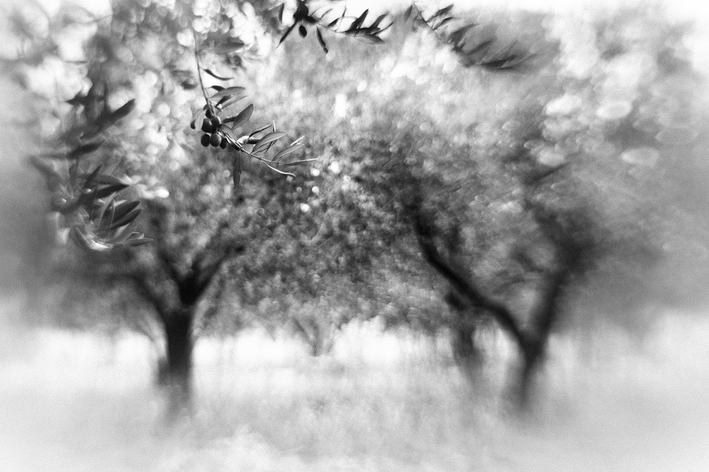A piece of fine art art photography titled Dreaming Olives by Anne Rose Pretorius