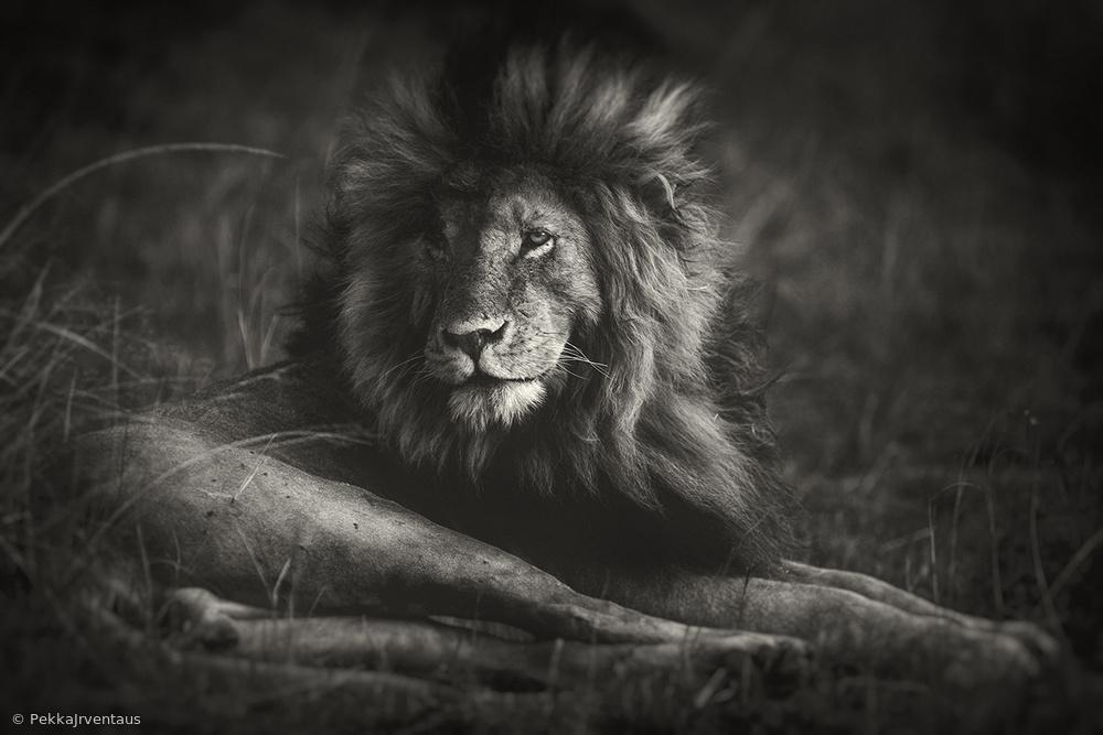 awake, masai mara