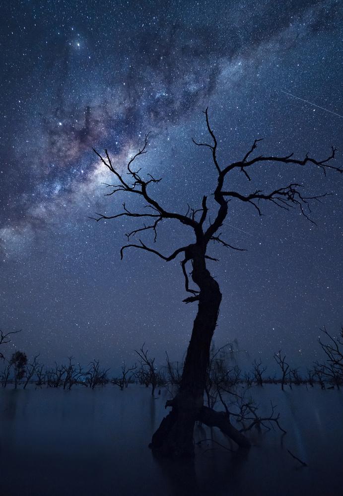 A piece of fine art art photography titled The Tree by Jingshu Zhu