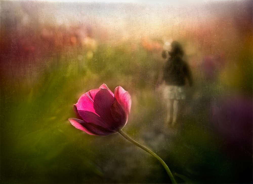 A piece of fine art art photography titled A Pink Childhood Memory by Shenshen Dou