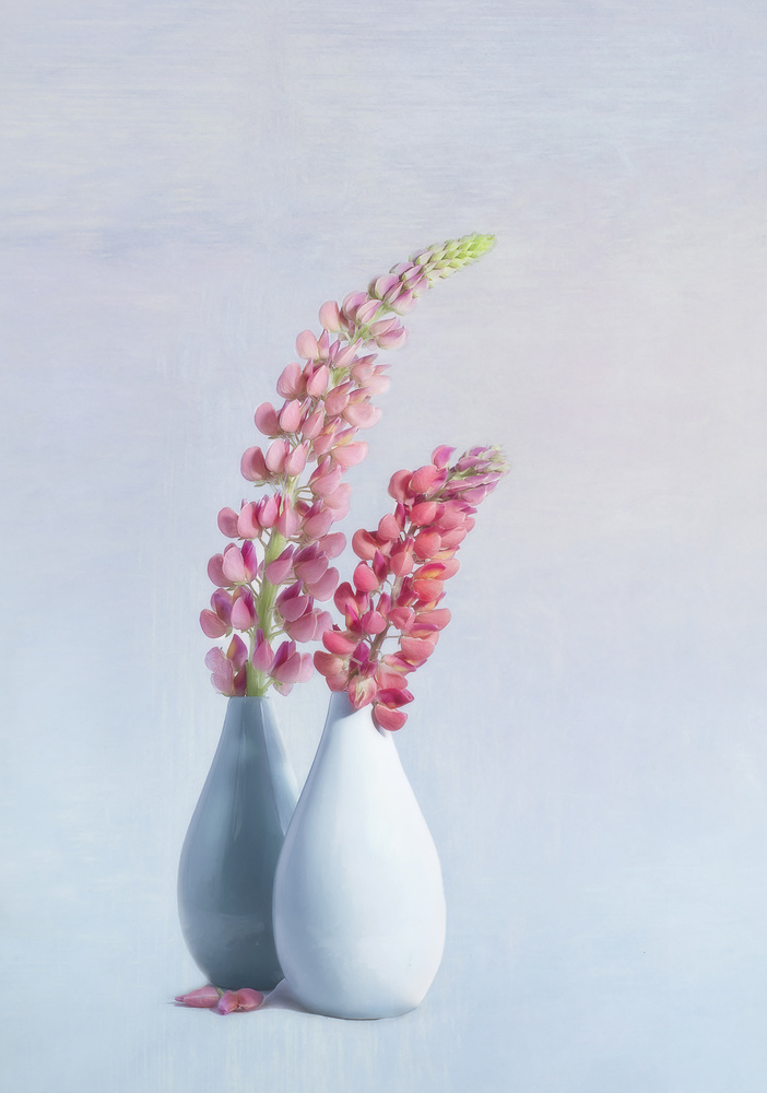 View this piece of fine art photography titled Lupins by Gaille Gray