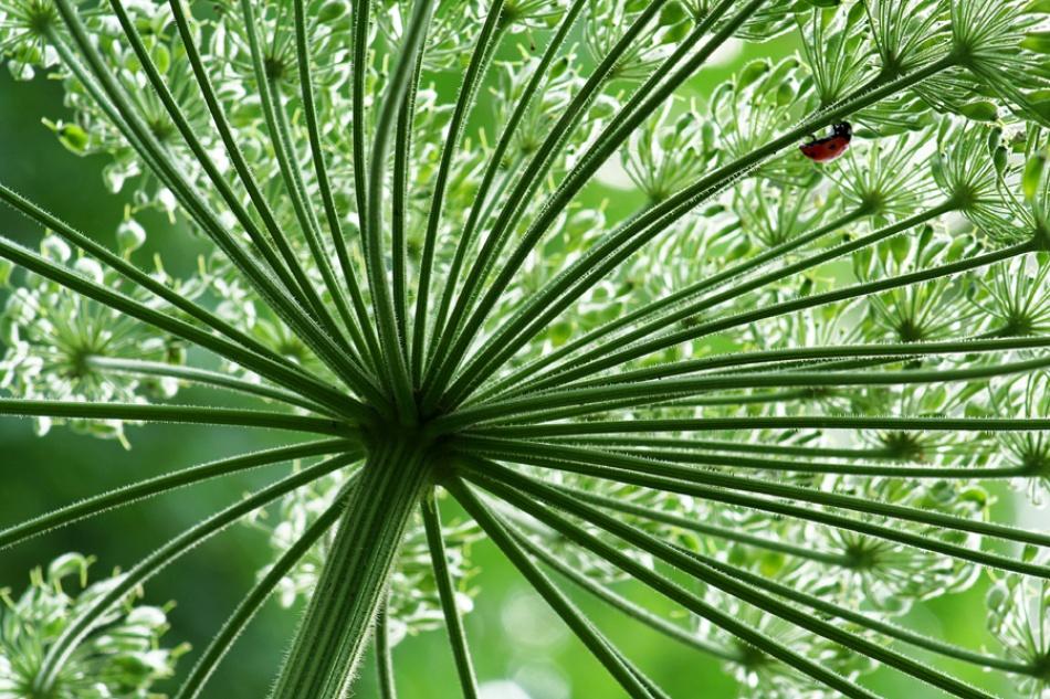 A piece of fine art art photography titled Little Ladybug by theo peekstok