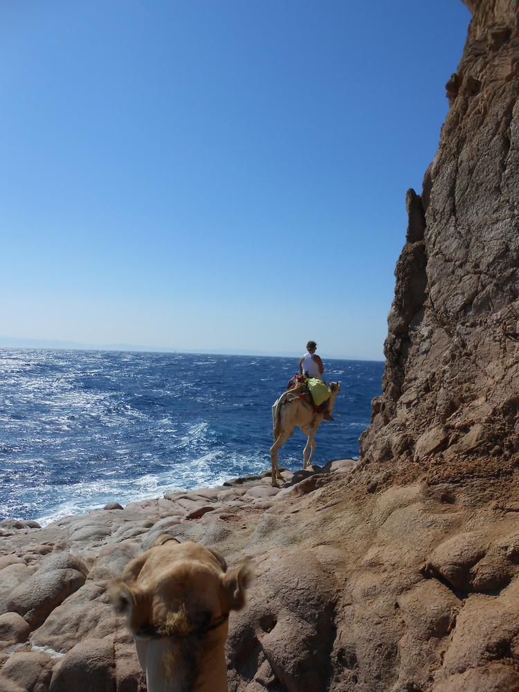 Ras Abu Galum, Egypt camel trail
