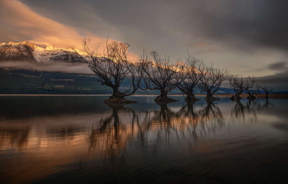 View this piece of fine art photography titled The Glenorchy Willow Trees by Hubert Bichler
