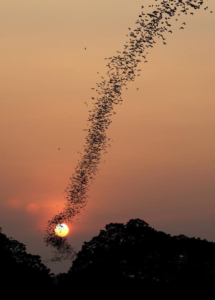 A piece of fine art art photography titled Bat Swarm at Sunset by Jean De Spiegeleer