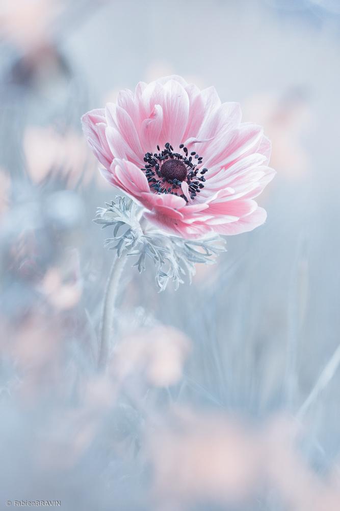 View this piece of fine art photography titled La reine de neiges by Fabien BRAVIN