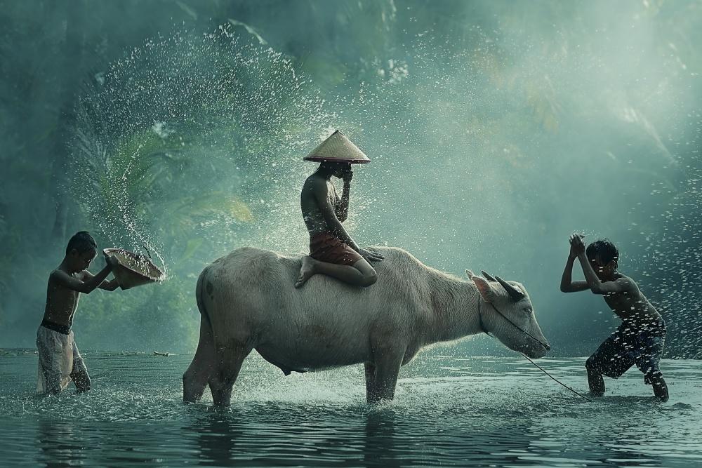 A piece of fine art art photography titled Water Buffalo by Vichaya