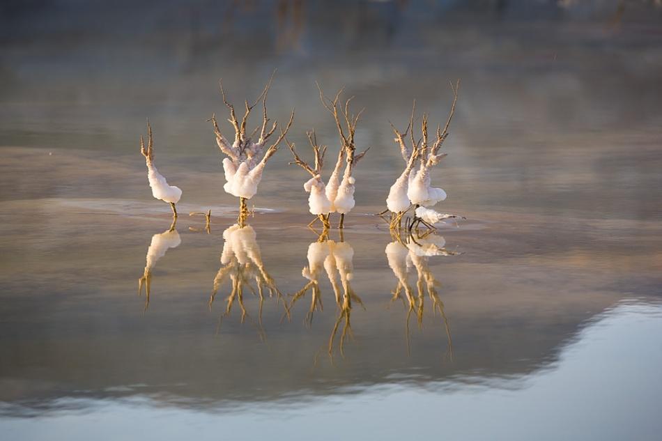 Dancers in the Dead Sea