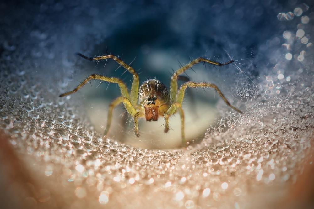 A piece of fine art art photography titled My Spider by Joko Mardiyanto