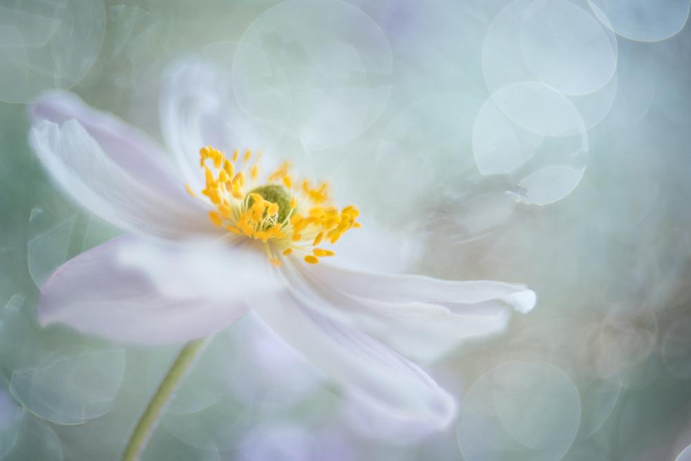 A piece of fine art art photography titled Rêveries De Fleurs by Christl Deckx