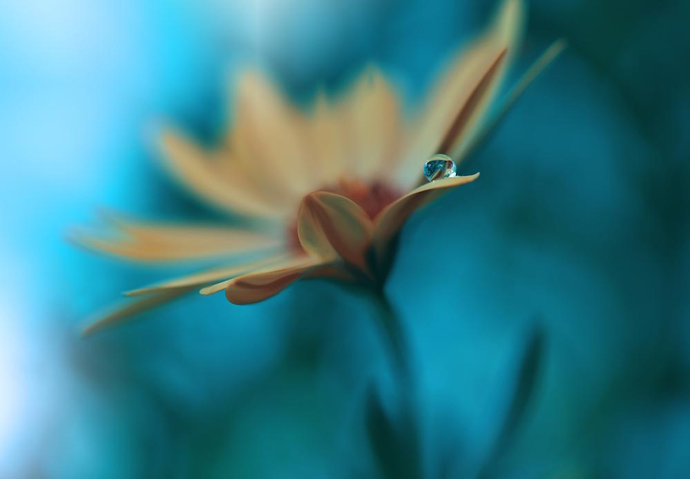 A piece of fine art art photography titled Memories of Sea by Juliana Nan