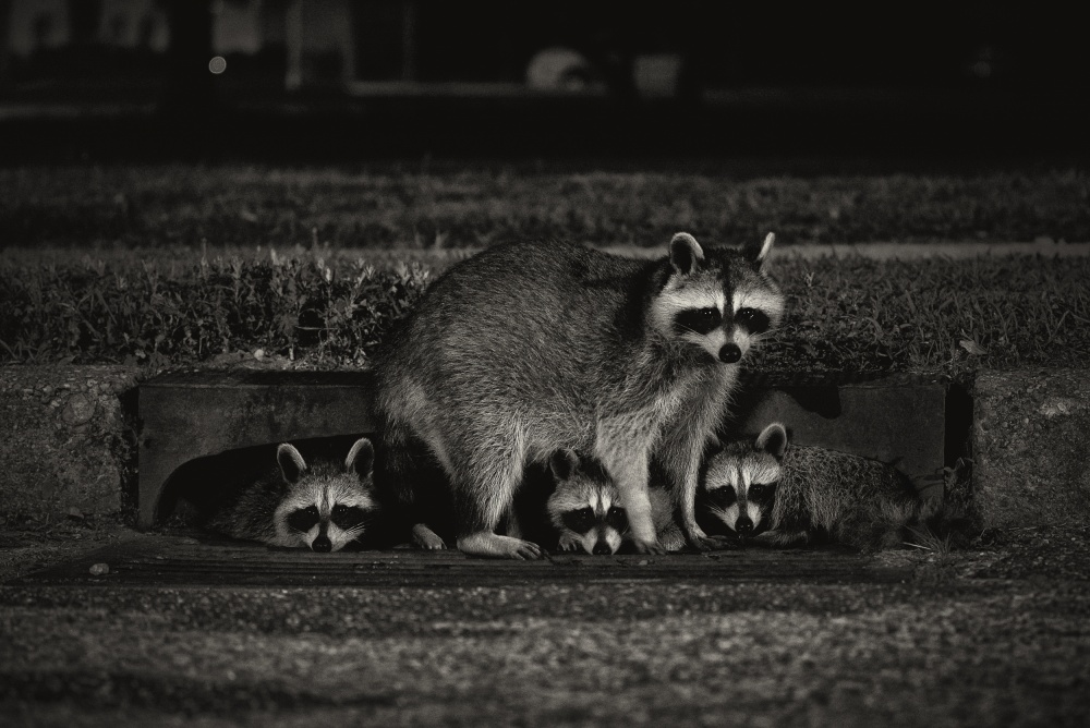 A piece of fine art art photography titled Nocturnal Family by Anthony Benussi